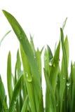 Gras- und Tautropfen Lizenzfreies Stockfoto