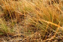 Gras und Tropfen Lizenzfreies Stockbild