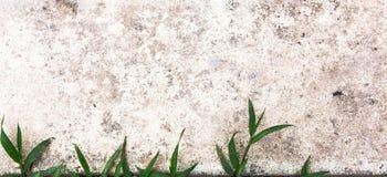 Gras und Wand als Hintergrund Stockfotografie