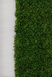 Gras-und Wand Beschaffenheit Stockbilder