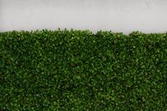 Gras-und Wand Beschaffenheit Stockfotos