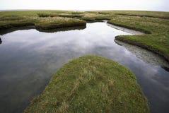 Gras und Wasser Stockfotos