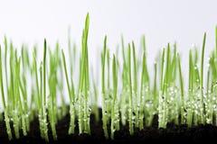Gras- und Wassertropfen Lizenzfreies Stockbild