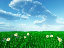 Gras und weiße Blumen