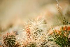 Gras- und Weizenhintergrund Stockbild