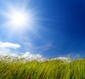 Gras- und Windschlag Lizenzfreie Stockfotografie