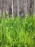 Gras und Zaun Lizenzfreies Stockfoto