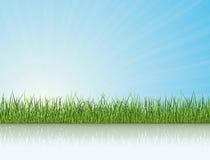 Gras unter dem Tageslicht vektor abbildung