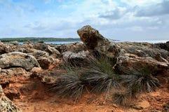 Gras unter den Felsen durch das Meer. Mallorca. Spanien. Lizenzfreies Stockbild