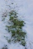 Gras unter Schnee Stockfoto