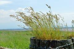 Gras växer på trästaketet arkivbilder