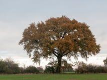 Gras van de boombladeren de herfst donkere humeurige van het achtergrondlandbouwbedrijflandschap Royalty-vrije Stock Afbeelding