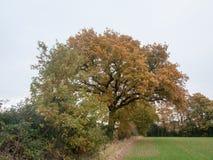 Gras van de boombladeren de herfst donkere humeurige van het achtergrondlandbouwbedrijflandschap Royalty-vrije Stock Fotografie