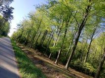 Gras van de bosbomen het blauwe hemel royalty-vrije stock fotografie
