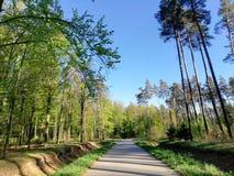 Gras van de bosbomen het blauwe hemel stock afbeelding