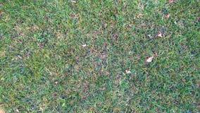 Gras van de groen-geel het drogende herfst Stock Afbeeldingen