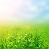Gras van de lente in zonlicht en defocused hemel Royalty-vrije Stock Afbeelding