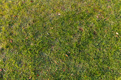 gras vanaf bovenkant Royalty-vrije Stock Afbeelding