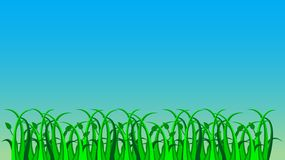Gras, vector Stock Illustratie