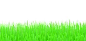 Gras, Vektor Lizenzfreies Stockfoto