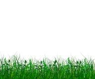 Gras verdes frescos Foto de archivo libre de regalías