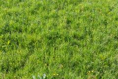 Gras verdi Fotografia Stock Libera da Diritti