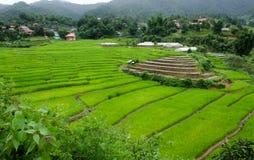 Gras Vers groen de lentegras met hut Zachte nadruk Abstract n Royalty-vrije Stock Fotografie