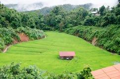 Gras Vers groen de lentegras met hut Zachte nadruk Abstract n Royalty-vrije Stock Foto's