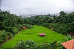Gras Vers groen de lentegras met hut Zachte nadruk Abstract n Stock Foto's
