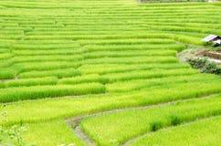 Gras Vers groen de lentegras met hut Zachte nadruk Abstract n Royalty-vrije Stock Afbeeldingen