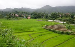Gras Vers groen de lentegras met hut Zachte nadruk Abstract n Royalty-vrije Stock Foto