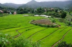 Gras Vers groen de lentegras met hut Zachte nadruk Abstract n Stock Afbeeldingen