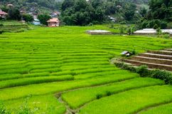 Gras Vers groen de lentegras met hut Zachte nadruk Abstract n Royalty-vrije Stock Afbeelding