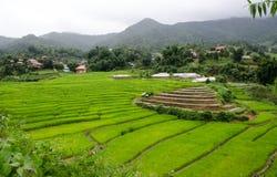 Gras Vers groen de lentegras met hut Zachte nadruk Abstract n Stock Fotografie