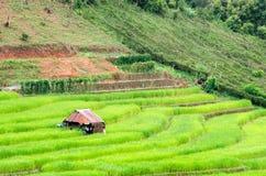Gras Vers groen de lentegras met hut Zachte nadruk Abstract n Stock Foto