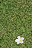 Gras version3 Stockbild