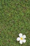 Gras version4 Stockbild