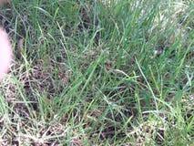 Gras verts Photographie stock