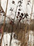 Gras vom Winter lizenzfreie stockbilder