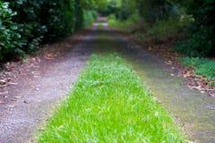 Gras wächst auf Land-Weg Stockfotografie