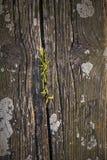 Gras wächst herein auf Holzbank Seat Stockfotografie