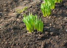 Gras wachsen Stockfotos