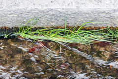 Gras wachsen in der Entwässerung Lizenzfreie Stockfotografie