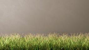 Gras-Wiese gegen Grey Wall Lizenzfreies Stockbild