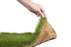 Gras-Wolldecke Stockfotografie