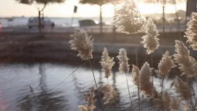 Gras in zon stock footage