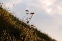 Gras in zonlicht Royalty-vrije Stock Afbeelding
