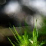 Gras in zonneschijn Stock Afbeelding