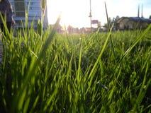 Gras & zonsondergang royalty-vrije stock foto