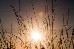 Gras in zonsopgang Royalty-vrije Stock Foto